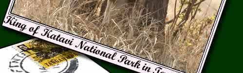 Katavi National Park is the 3rd largest national park in Tanzania.  Click to find out more about Katavi National Park.